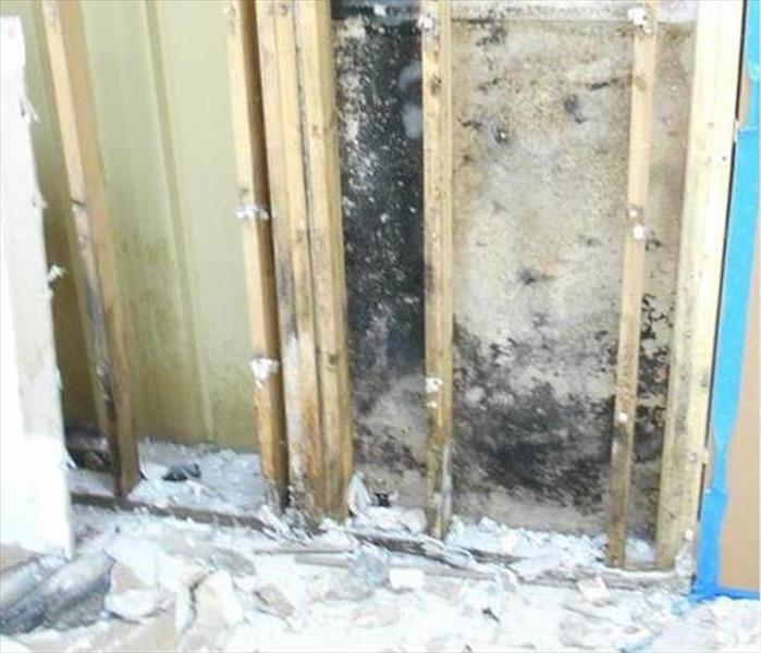 Mold Remediation Need in West Tampa