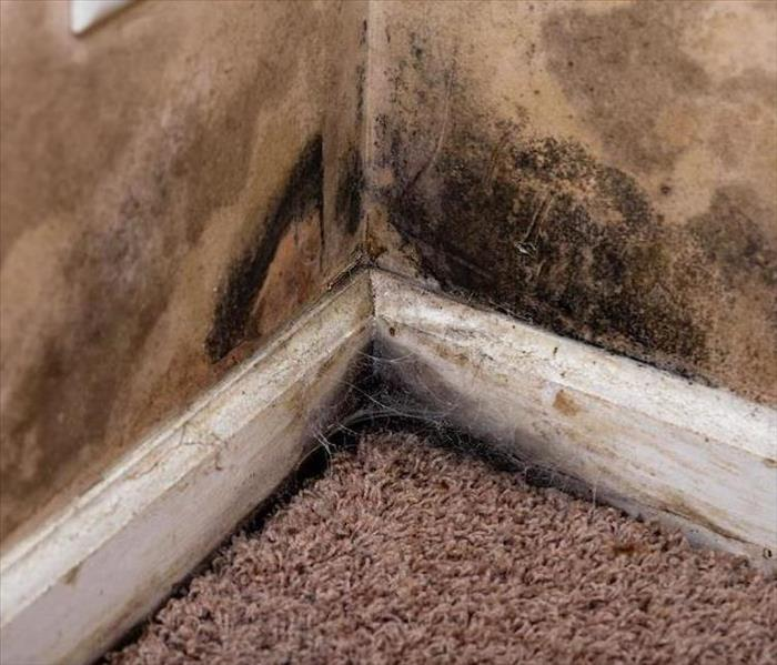 Mold Remediation Persistent Mold in Tampa Needs Remediation From SERVPRO
