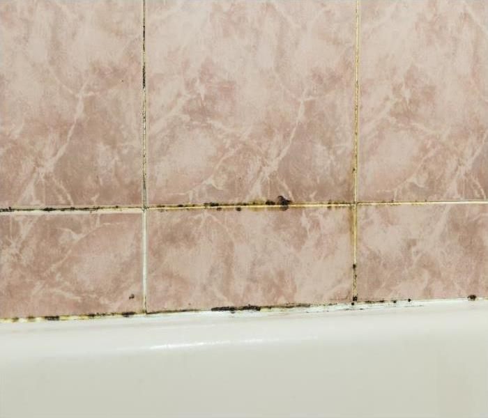 Mold Remediation Bathroom Remodeling In Tampa Homes After Mold Damage