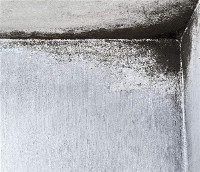 Mold Remediation Why is Toxic Black Mold Dangerous?