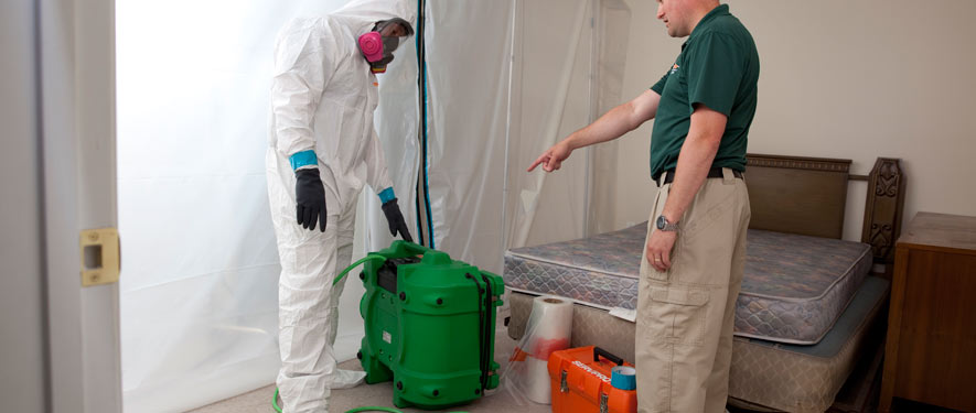 Tampa, FL mold removal process